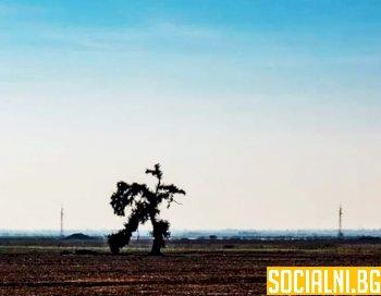 Бяга ли това дърво на снимката или не