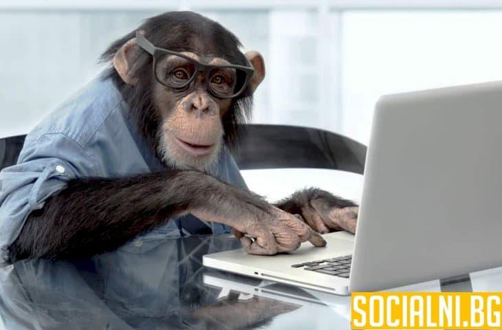 Маймуна управлява компютър със съзнанието си
